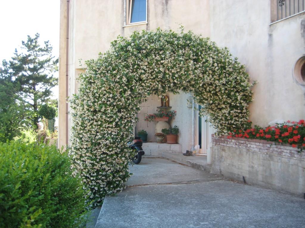 L'arco rigoglioso pieno di fiori di gelsomino di Mariacristina Manna