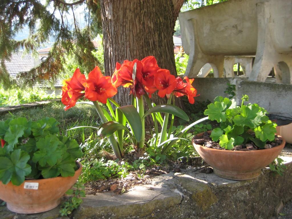 Un angolo fiorito del giardino di Anna Mungiello