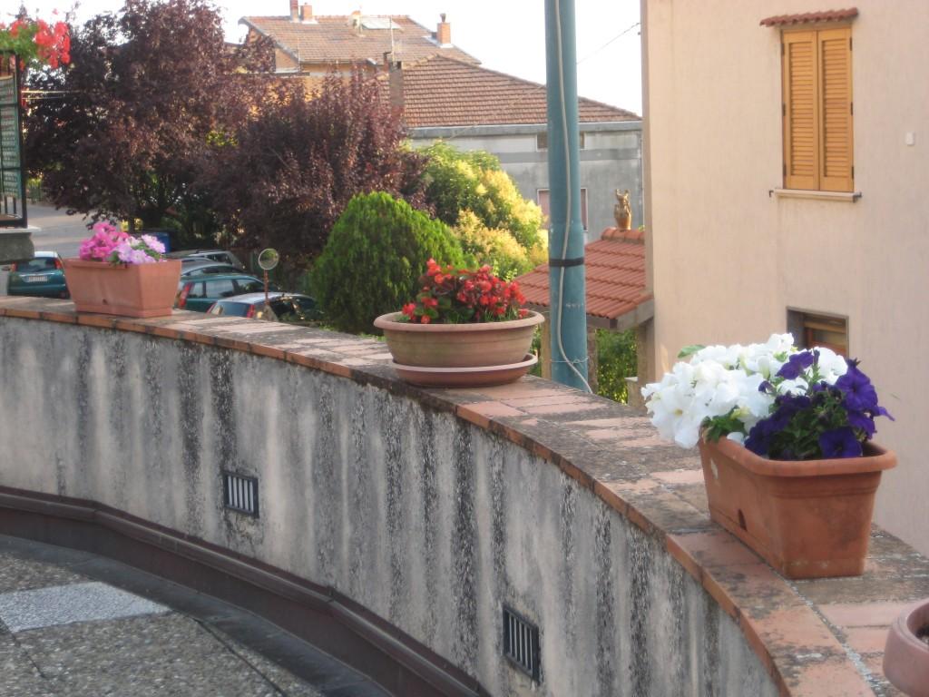 Arredo floreale con petunie e begonie di Rosaria De Rosa