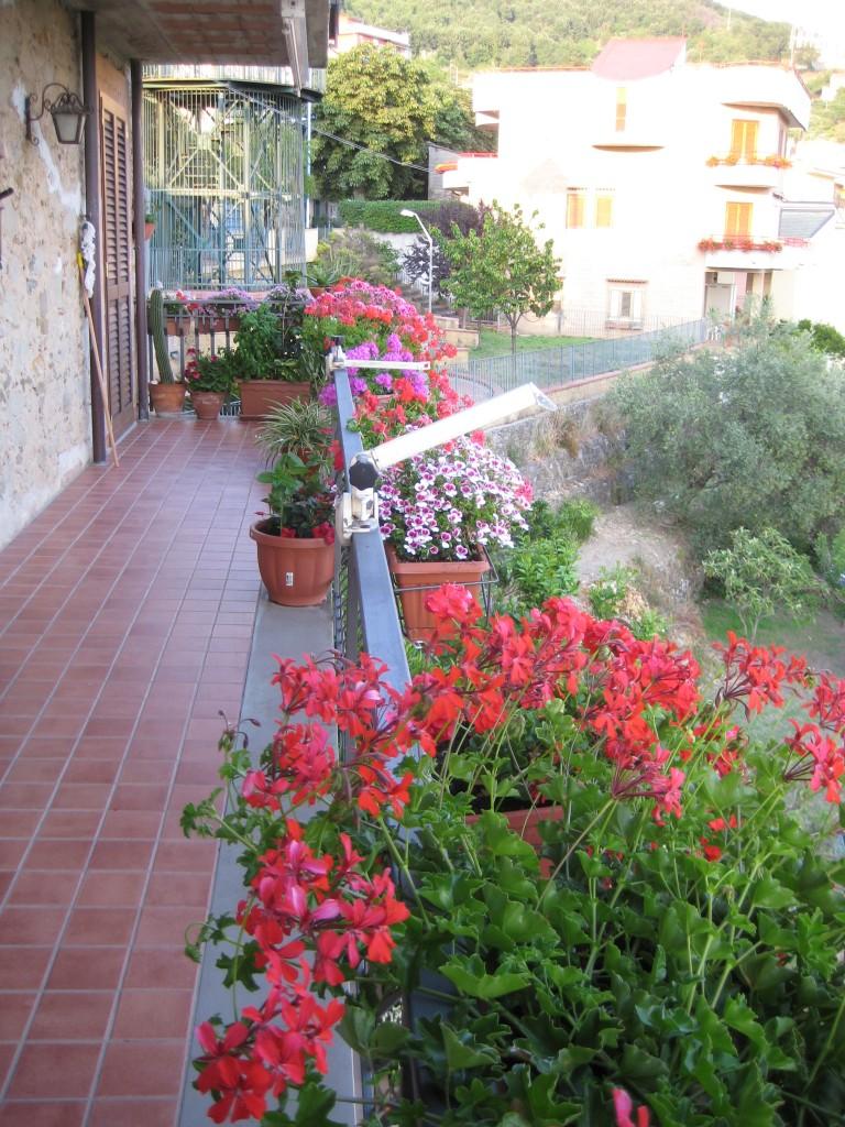 La colorata balconata con gerani parigini di Carmelinda D'Aiuto