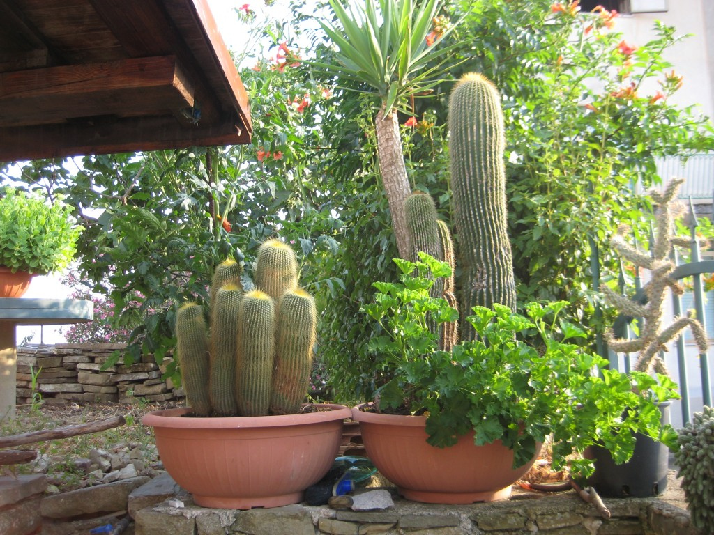 I cactus di Angelo D'Elia